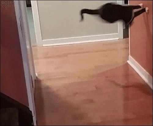 Enlace a Este gato ha encontrado la manera de no perder tracción al doblar la esquina