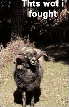 Enlace a Nunca te metas con este carnero, menudo pronto