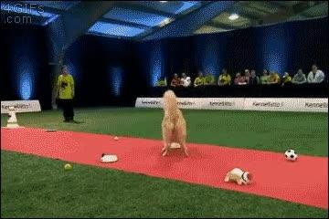 Enlace a Lo mismo que pasaría si llevo a mi perro a una competición de obediencia