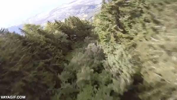 Enlace a Sentirte como un halcón volando entre árboles con un wingsuit