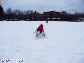 Enlace a ¿Es que nadie le dijo a este perro que la nieve resbala?