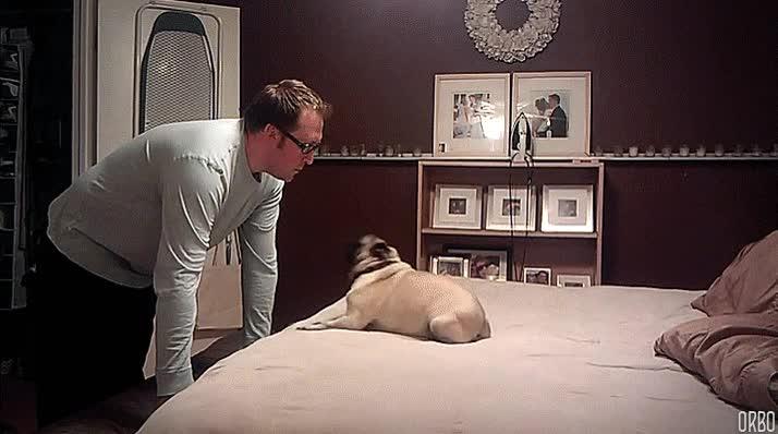 Enlace a Si me hago un muñeco de cera como éste, puedo tener a mi perro entretenido todo el día
