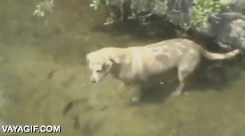 Enlace a El perro pescador
