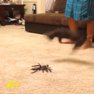Enlace a Y yo pensaba que me daban miedo las arañas...
