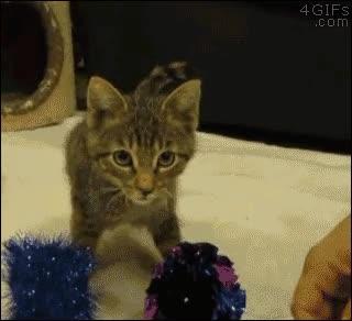 Enlace a Un gatito sin patas delanteras se divierte