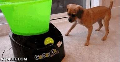 Enlace a Este perro no necesita a nadie para jugar