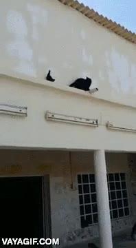 Enlace a La paloma troll y el gato que no sabía dar la vuelta en las cornisas
