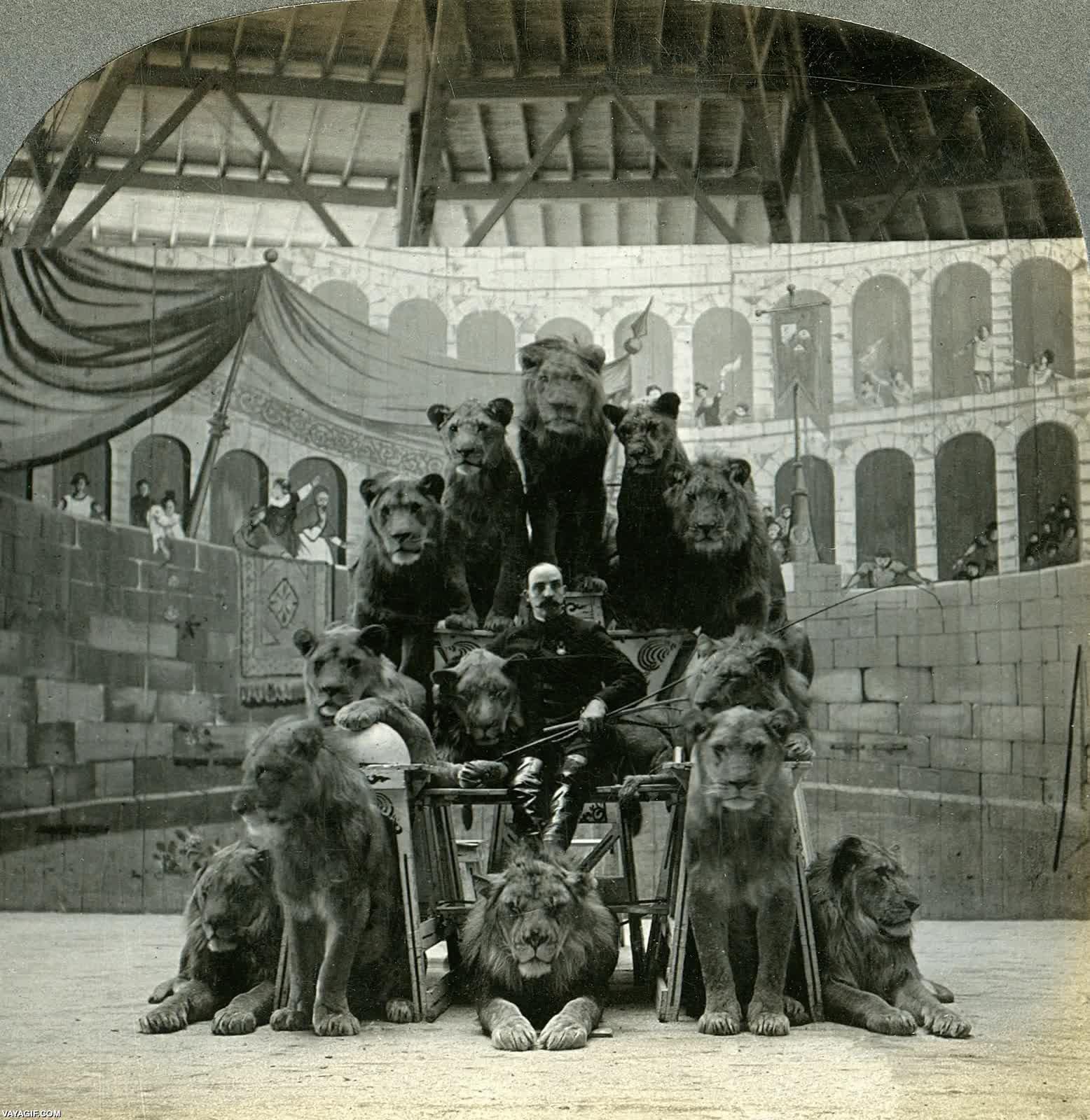 Enlace a Un domador de leones posando con sus bestias en 1905