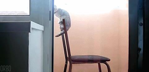 Enlace a La eterna lucha de los gatos contra la gravedad