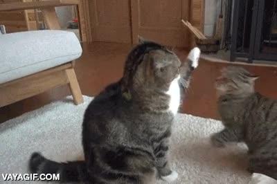 Enlace a ¡A mí no me levantes la mano que te reviento!