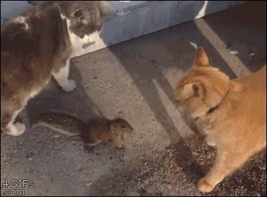 Enlace a ¿¡Pero por qué dejas que se me acerque este bicho!? ¡La culpa es tuya!
