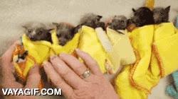 Enlace a Los bebés murciélago ya están listos para ir a dormir