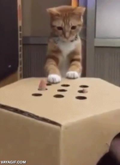 Enlace a Hacer un juego para tu gato con una caja y unos agujeros