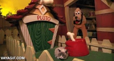 Enlace a Pluto ya sabe cómo le va a ir compartiendo caseta con Grumpy Cat