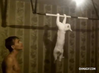 Enlace a Haciendo un poco de ejercicio con mi gato