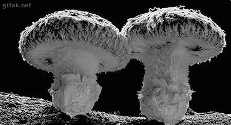 Enlace a Y por eso a las explosiones nucleares les llaman hongos o setas