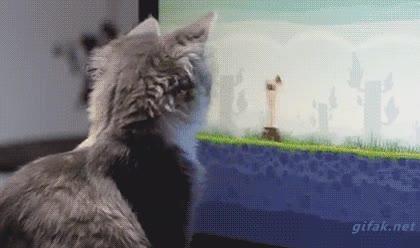 Enlace a El gato que aprendió a jugar al Angry Birds