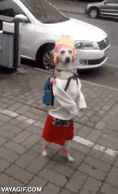 Enlace a Este perro está preparado para su primer día de colegio