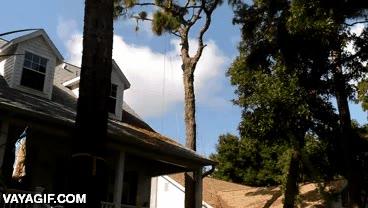 Enlace a Dos horas de trabajo para cortar un pedazo de árbol resumidas en unos pocos segundos