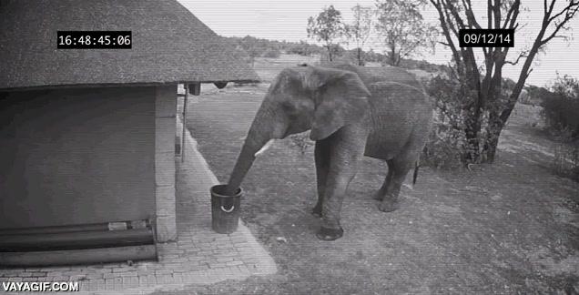 Enlace a El elefante ecologista