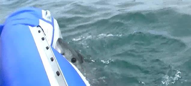 Enlace a Salgamos a navegar con mi barca hinchable, ¿qué podría salir mal?