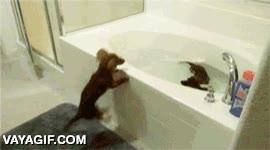 Enlace a Estos dos perros se mueren de ganas de darse un bañito