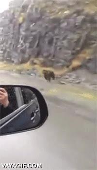 Enlace a Esto es un oso corriendo a su máximo nivel, casi como un coche
