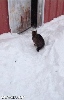 Enlace a La primera nevada que ha visto este gato y parece que le encanta