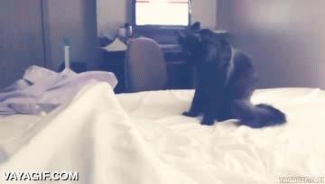 Enlace a Si tienes gatos, ten cuidado cuando te despiertes si los tienes cerca, porque van a muerte