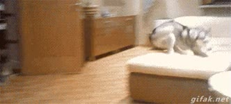 Enlace a Nada más entrañable que ver a un perro jugando con sus cachorros