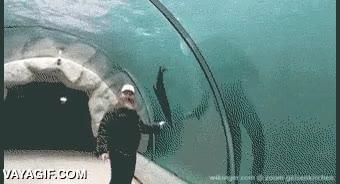 Enlace a Nuevo acuario táctil