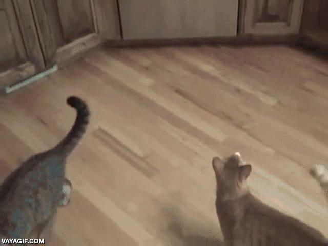 Enlace a ¿Quieres conseguir que tu gato deje de subirse a la encimera? Dale un escarmiento como este