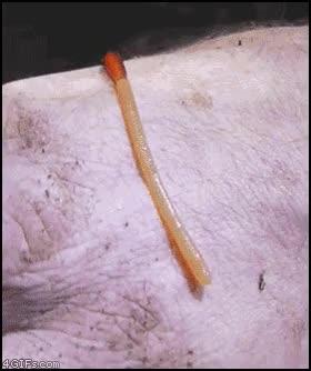 Enlace a Parece que a este gusano no le gusta demasiado que lo toquen