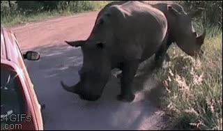 Enlace a Qué traviesos estos rinocerontes, pinchan una rueda y salen corriendo