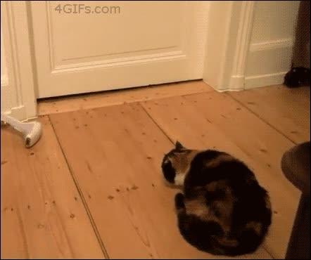 Enlace a Hay gatos asustadizos y luego está este