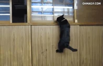 Enlace a Nada puede igualarse a las habilidades ninja de un gato