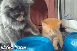 Enlace a Gata enseñando a su cachorro a beber agua