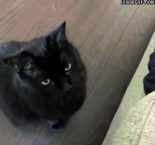 Enlace a Un gato que prefiere el envoltorio al caramelo