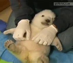 Enlace a Haciéndole cosquillas en la barriga a este cachorro de oso polar