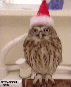 Enlace a No parece muy contento con su nuevo look navideño
