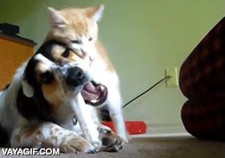 Enlace a Terrible ataque a traición de este malvado gato a este inocente perro