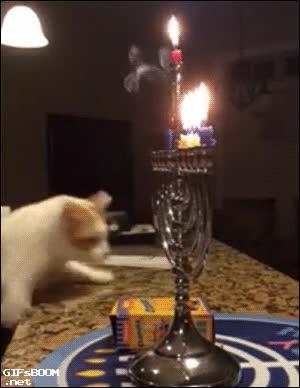 Enlace a El gato que odiaba las velas aprendió algo aquella noche