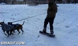 Enlace a ¿Que cuesta desplazarse por la nieve? Eso es porque no tienes dos perros como estos