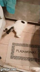 Enlace a Estás atrapado gato, la puerta está cerrada y no puedes escap... ¿CÓMO LO HACE?