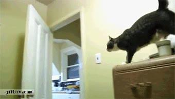 Enlace a Nada se interpondrá entre un gato y su chuchería favorita
