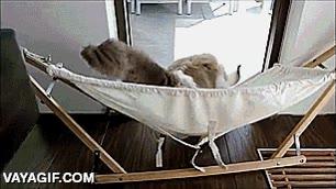 Enlace a Timo, el gato que aprendió a disfrutar de su hamaca