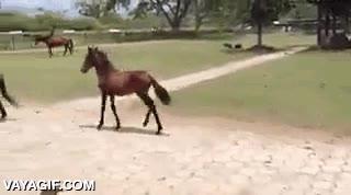Enlace a No has visto un trote de caballo más cómico que este