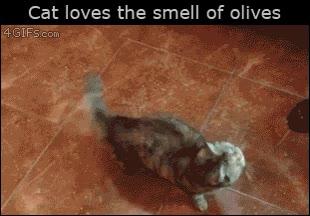 Enlace a A este gato le pasa como a mí, no soporta el olor a olivas
