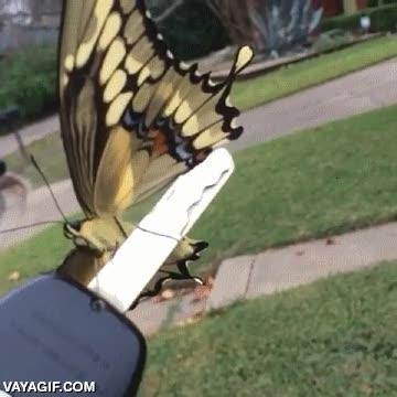 Enlace a ¡Oh, hola señora mariposa! ¿Le importaría salir de mi llave del coche?
