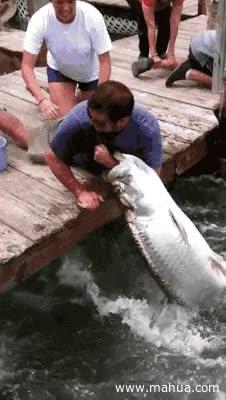 Enlace a Un sistema de pesca muy manual